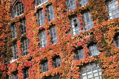 Autumn leaves at the Univerity Library